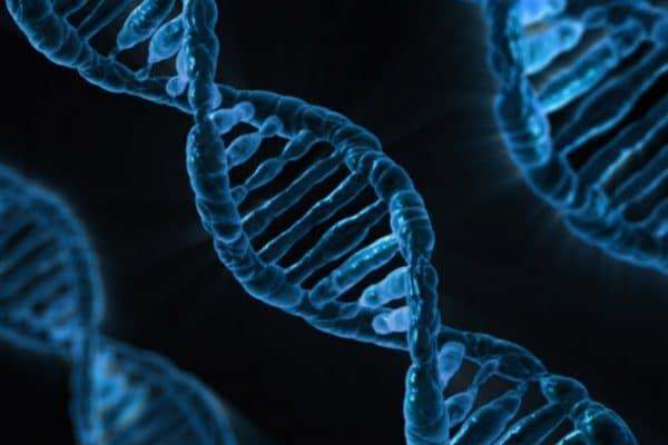 Est-ce que la maladie d'Alzheimer est génétique ?